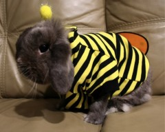 rabbit-bee.jpg