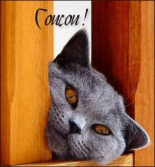 coucou-chat3.jpg