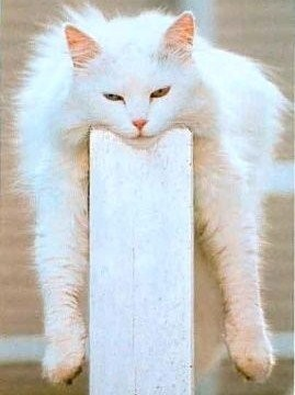 normal_humour-animaux-chats-drole-091-1--copie-1.jpg